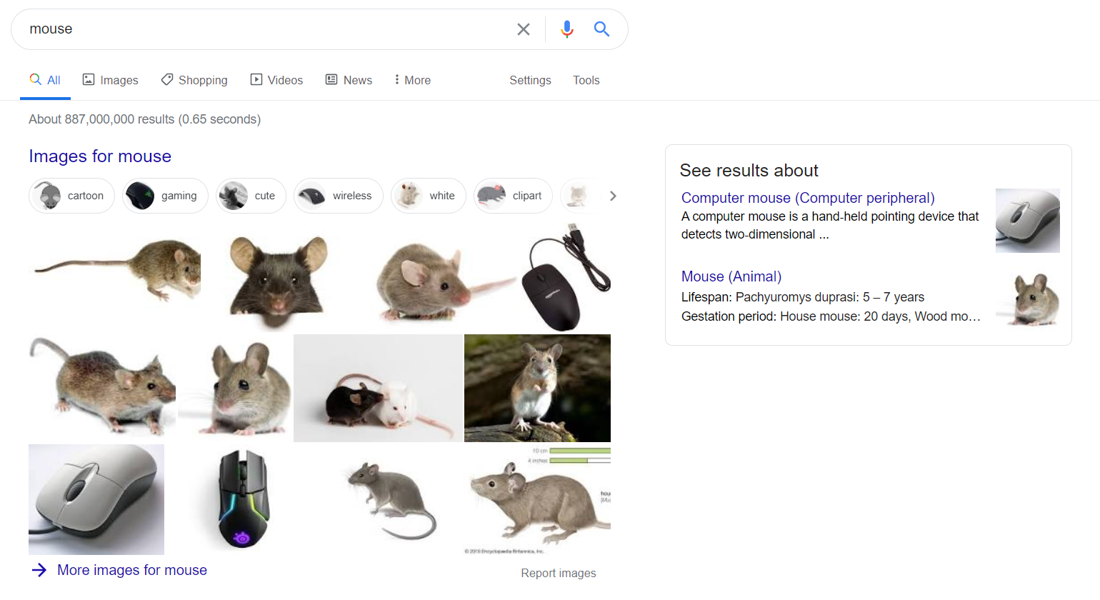mouse vs computer mouse - example